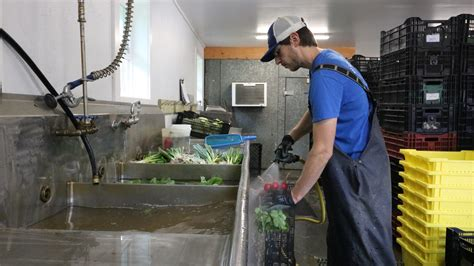 vegetable wash sinks tanks tubs  basins upgrades