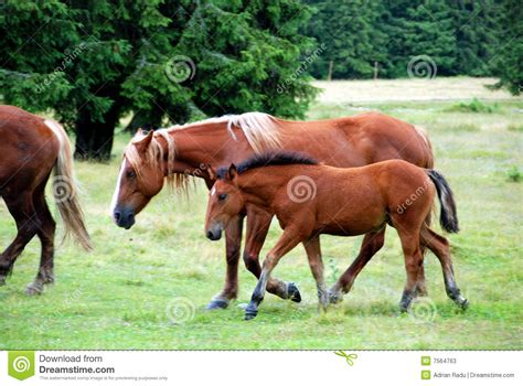 horses wild eating mammal preview