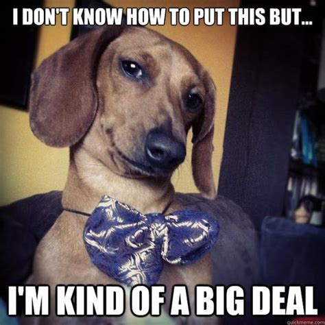 Wiener Dog Meme - dachshund memes know how to put this but i m kind of a big deal big deal dachshund