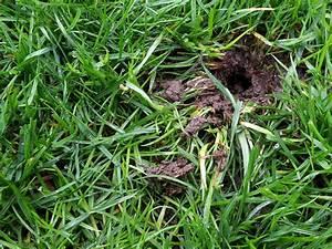 Löcher Im Rasen : spuren im garten mit meinem garten durchs jahr ~ Lizthompson.info Haus und Dekorationen