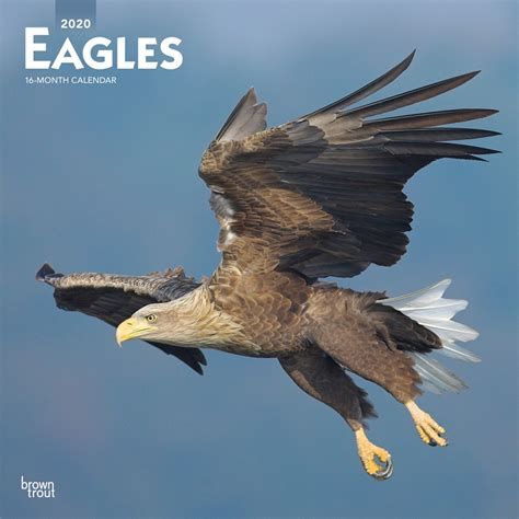 eagles monthly square wall calendar american