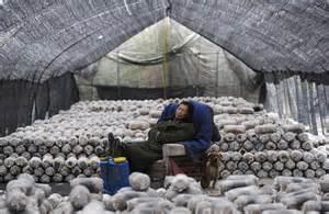 cooperative promotes modern mushroom farming in jinshan ne