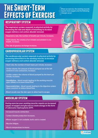 short term effects  exercise physical education poster