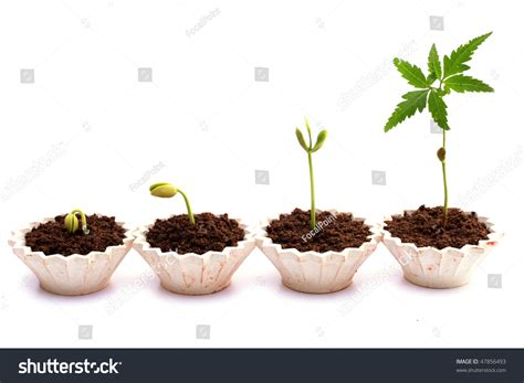 Plant Growthstages Plant Development Stock Photo 47856493 Shutterstock