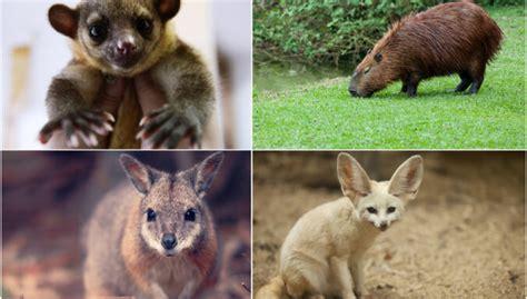 Četri eksotiski dzīvnieki, kurus mēdz turēt kā mājdzīvniekus - DELFI