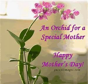 An Orchid For A Special Mother, Happy Mothers Day Pictures ...