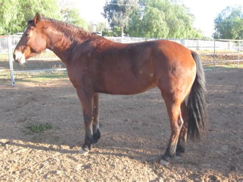 hives horse common owner treat horrifies case ailment easy patch had