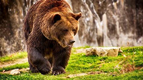 Виды медведей. описание названия и особенности медведей . животный мир