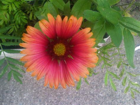colorful perennials an especially colorful perennial gardening
