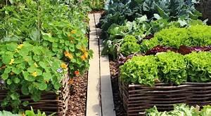 Gemüse Pflanzen Was Passt Zusammen : hochbeet bepflanzen so w chst das gem se ~ Lizthompson.info Haus und Dekorationen