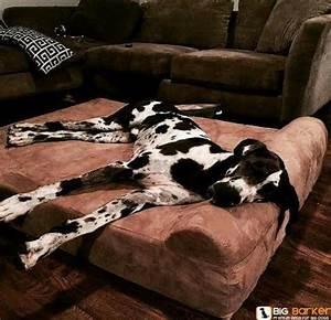 dog beds great danes and beds on pinterest With great dane dog beds