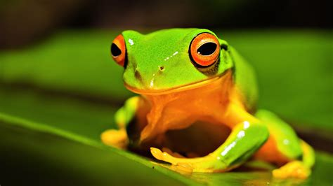 Green Animal Wallpaper - animals 1920x1080 hd wallpapers 1080p wallpapers