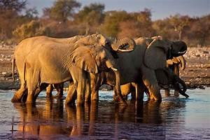 Haus Kaufen Namibia : etosha nationalpark in namibia abenteuerliches afrika in 2018 pinterest ~ Markanthonyermac.com Haus und Dekorationen