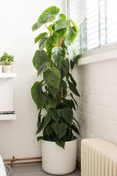 10 cool house plants to grow inside home office ideas
