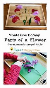 The 25+ best Flower parts ideas on Pinterest