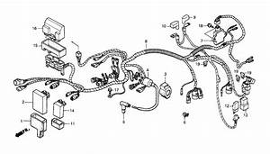Diagram 2000 Honda Foreman Headlight Wiring Diagram Full Version Hd Quality Wiring Diagram Diagramsyong Zanshinkarate It