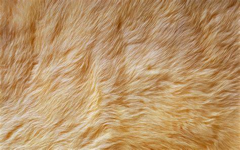 Fur Wallpaper For Bedrooms fur wallpaper for bedrooms beautiful desktop wallpapers 2014