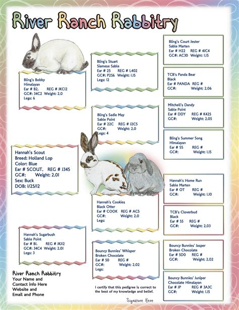 blog nature trail templates cute bunny photo blog with funny captions
