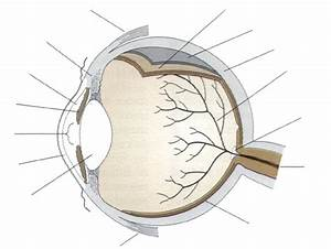 Label Functions Of Parts Of The Human Eye