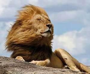 Los mejores destinos para un safari en África