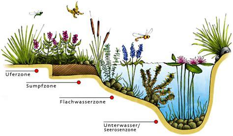 Teichpflanzen Fuer Verschiedene Wasserzonen by Ihr Teichpflanzenshop Im