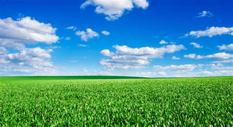 隣 の 芝生 は 青く 見える