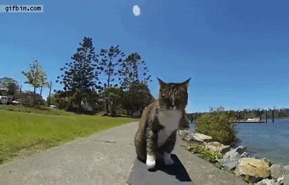 skateboarding cat jumps  dog  funny gifs updated