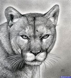 How To Draw A Realistic Puma Mountain Lion Animal Drawn