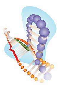 Rice Lab Offers New Strategies  Tools For Genome Editing