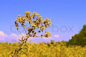 Gelbe Sommerblumen Mehrjährig : gelbe sommerblumen auf wiese kinburn spucken in der n he von otschakiw ukraine stockfoto ~ Frokenaadalensverden.com Haus und Dekorationen