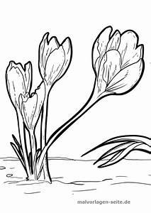 Wann Krokusse Pflanzen : malvorlage krokusse malvorlagen krokusse pflanzen und ~ A.2002-acura-tl-radio.info Haus und Dekorationen