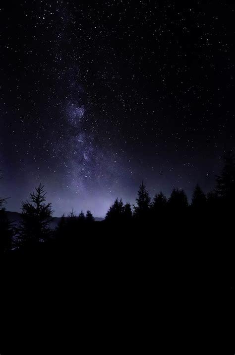 Pine Trees Under Starry Sky Photo Free Night Image