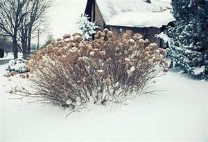 Sind Hortensien Winterhart : hortensien im winter sind alle hortensien winterhart ~ Orissabook.com Haus und Dekorationen