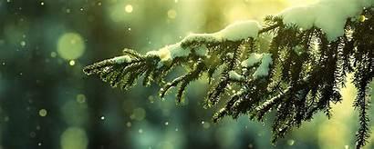 Winter Dual Monitor Wallpapers Screen Christmas Tree