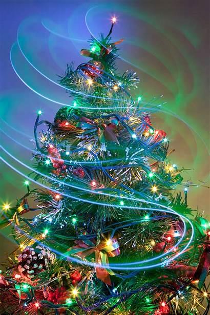 Christmas Tree Season Merry Trees Holiday Scenes