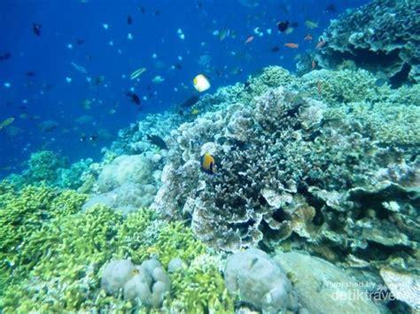 bunaken keindahan bawah laut yang tiada duanya