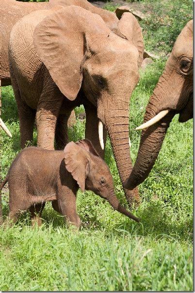 dezember  rettet die elefanten afrikas ev