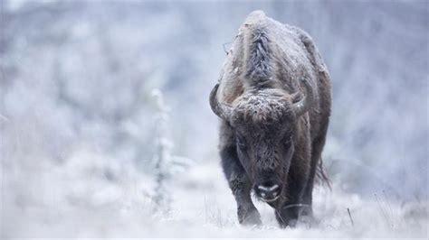 join  wildlife photographer   hunt   perfect shot