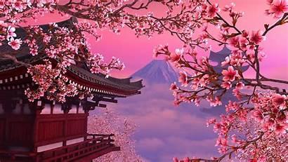 Sakura Tree Wallpapers Blossom Cherry Japanese Screensaver