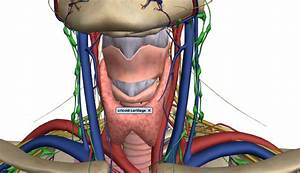 Check Out This Amazing 3d Anatomy Model From Google  U2013 Pemblog