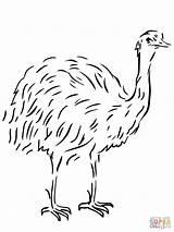 Emu Template Coloring Bird Flightless Australian Animal Clipart Drawing Templates Printable Ausmalbild Vogel Tiere Birds Kangaroos Ausmalen Sheet Sketch Supercoloring sketch template