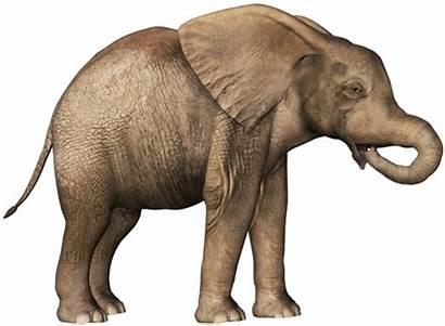 Elephant Transparent Clipart Background Clip Elephants Baby2