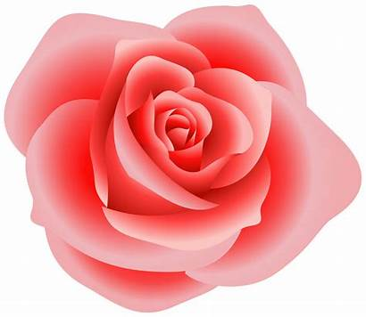 Roses Clip Rose Vector Designs Clipart Pink