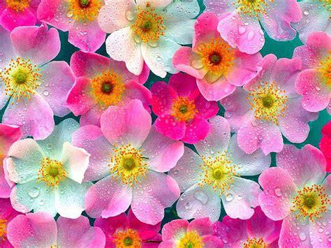 keren   gambar bunga wallpaper gambar