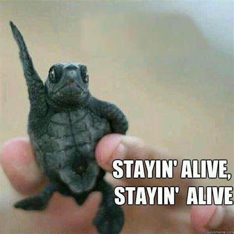 Tortoise Meme - how do tortoises and turtles live for so long 187 science abc