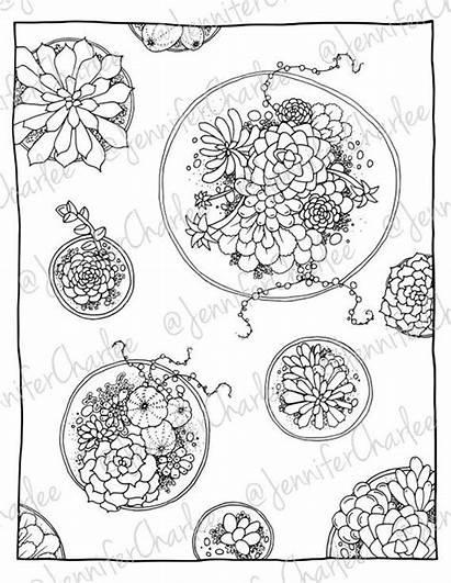 Coloring Succulents Adult Pages Terrarium Plant Detailed