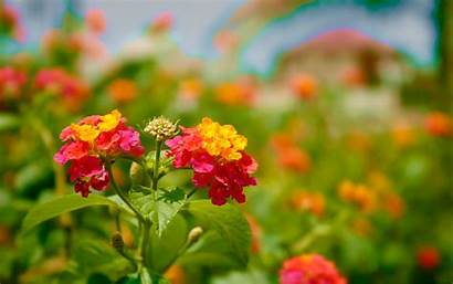 Flowers Colorful Flower Wallpapers Park Backgrounds Natures