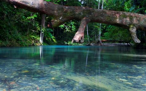 facts  daintree rainforest fact file