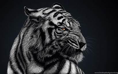 Tiger Animal Wallpapers Desktop Background