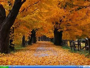 fall | introdekatelyn  Fall
